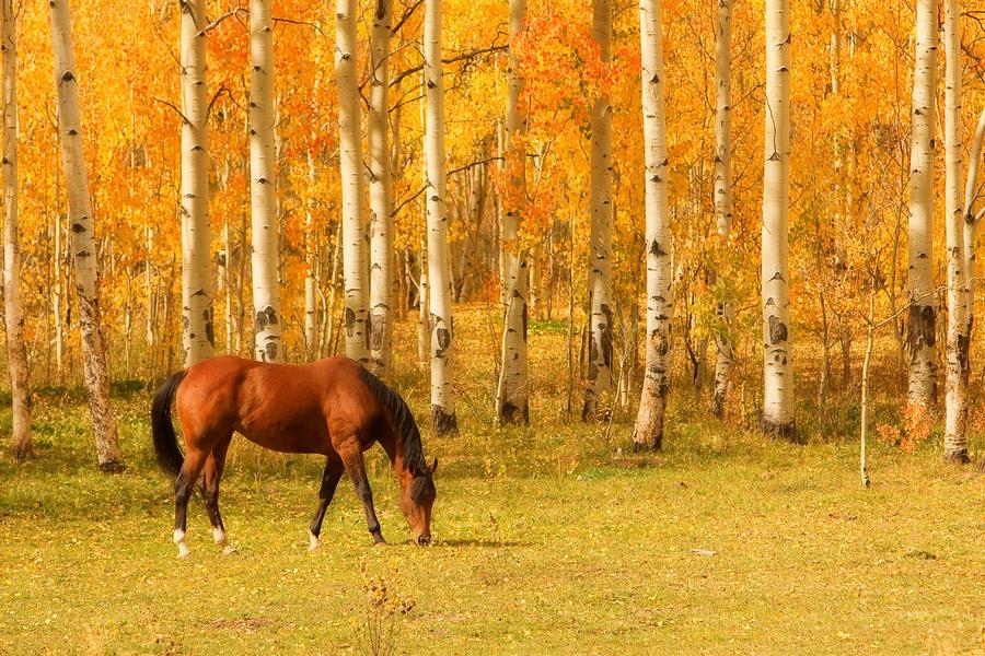 rudens zirgs
